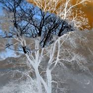 Winterszenen - Winterscenes