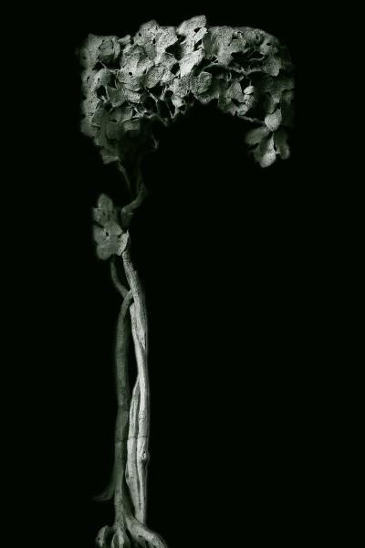 Baum des Lebens copy